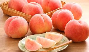 【訳あり/送料込み】甘い果汁がたっぷり。緻密な果肉と芳醇な味わい《山形県産白桃 約2kg(玉数おまかせ)》