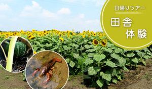 【田舎体験イベント】子供に体験や大人も一緒に田舎を楽しもう。自然を体験しよう。《【現地集合・現地解散】田舎体験イベント 旬の野菜収穫と夏休み田舎遊び体験編》【8月5日(日)限定】