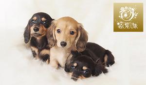 【送料無料/94%OFF/3講座(4資格)/ディプロマ発行】ペットのいるご家庭に。ペットロスの対処法とハーブ&アロマの知識を学ぶ《ペットロスアドバンス&ハーブ+アロマテラピーインストラクター&ペットアロマ通信講座》
