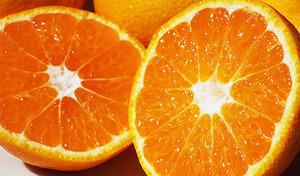 【送料込み】日本有数のみかんの産地、愛媛県八幡浜の太陽が育んだ「御蜜柑」。豊潤でまろやかな甘味《小林果園の「媛一みかん」約3.5kg》
