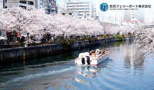 【桜を満喫/毎年大好評のお花見クルーズ】横浜の桜の名所・大岡堤の桜並木を楽しむ45分間の船旅。屋根のない開放感が気持ち良い船で春景色を満喫《お花見クルーズ》