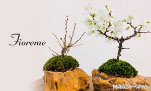 桜のミニ盆栽手作り体験レッスン120分|3枚利用可|スタジオFioreme|中央区 八丁堀駅