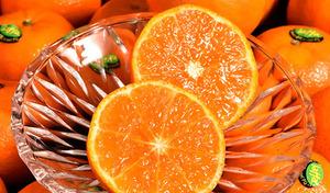 【送料込み】オレンジなのにトロピカルな風味が漂う、不思議なおいしさ。香り高い果汁がたっぷりで、コクのある甘みが魅力《オア オレンジ 約2kg》