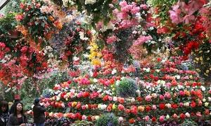 富士花鳥園 入園|世界のフクロウ約30種をはじめ、花と鳥が楽しめる動植物園