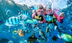沖縄の海を満喫。青の洞窟で魚と泳ぐシュノーケリングと、海を滑走バナナボードを≪青の洞窟シュノーケリング(器材一式・魚用エサなど込)+バナナボード≫全日利用可 @サマーリゾート沖縄